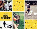 Imagem do produto Curso de Dog Walker & Babá Pet